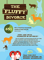 Infographic describing divorce involving pets